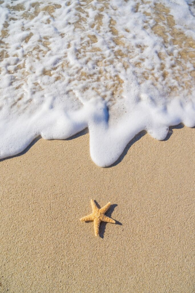 starfish seashell on the beach summer wallpaper for Iphone