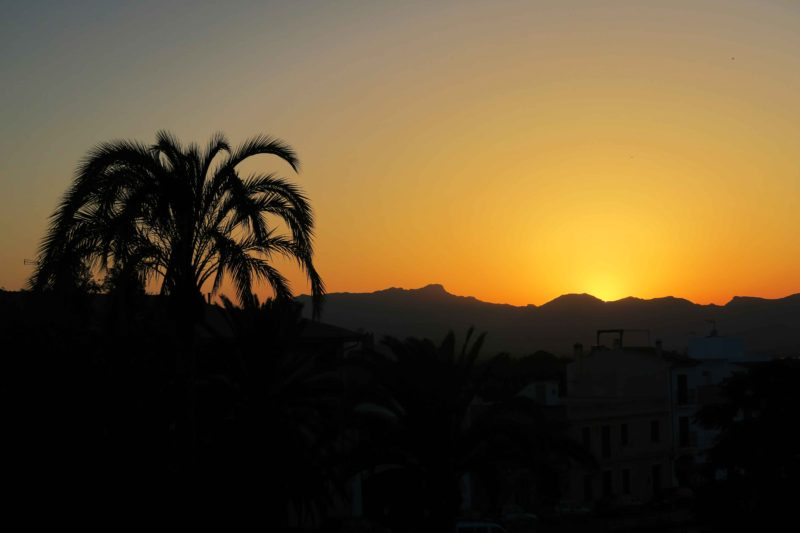 sunset and palm tree in Alcudia, Mallorca, Spain