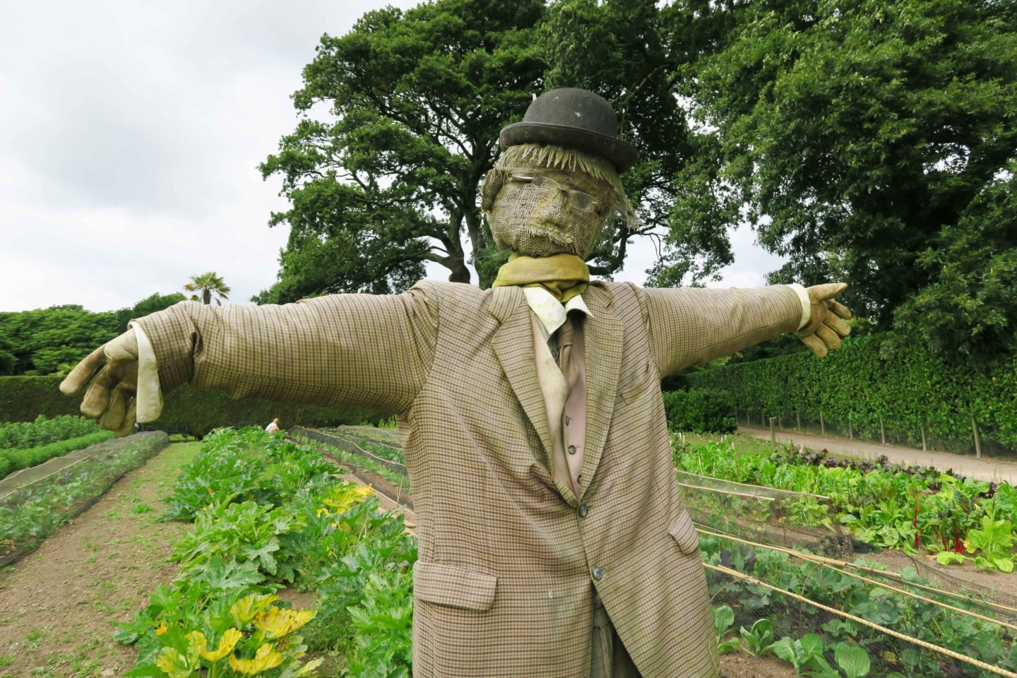 scarecrow in front of vegetable patch at the lost gardens of heligan in cornwall