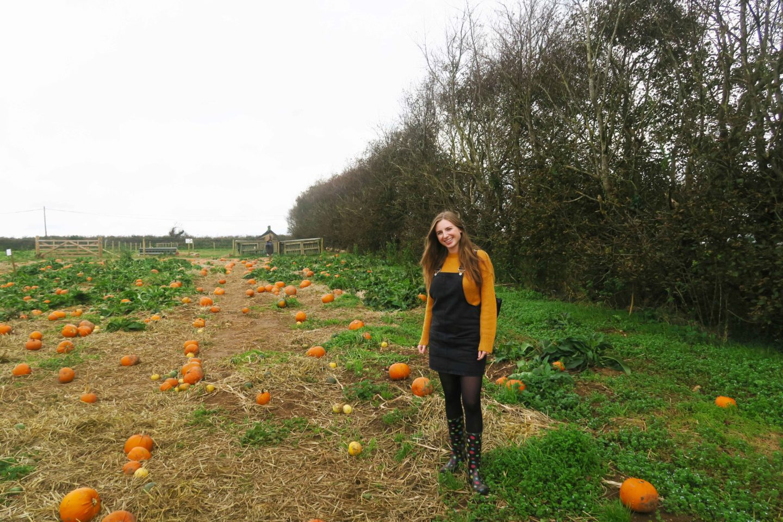 pumpkin field mustard jumper