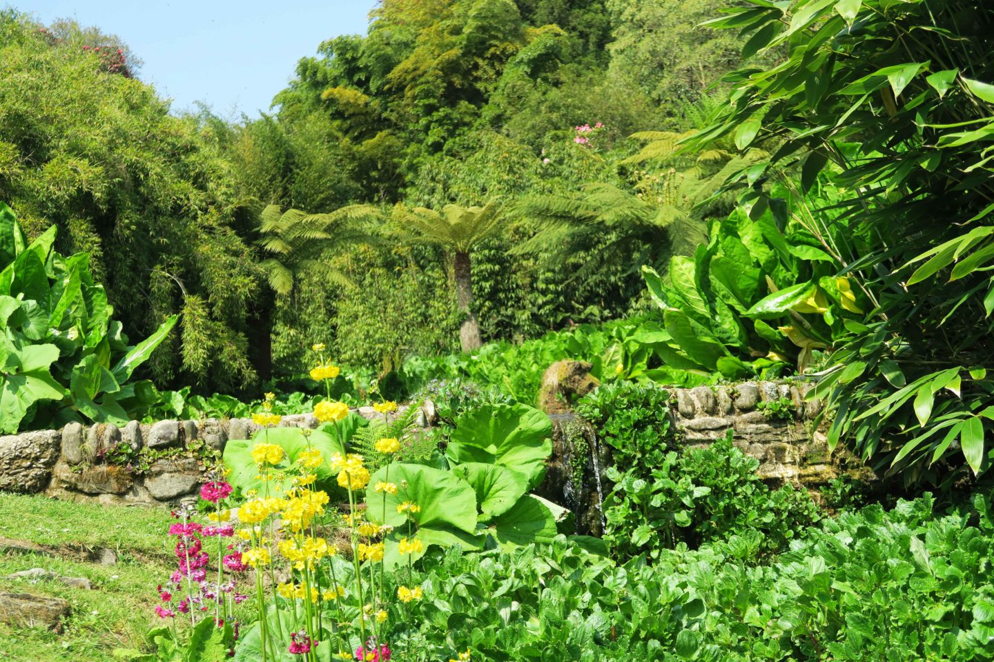 tebah gardens pond and plants in cornwall, england