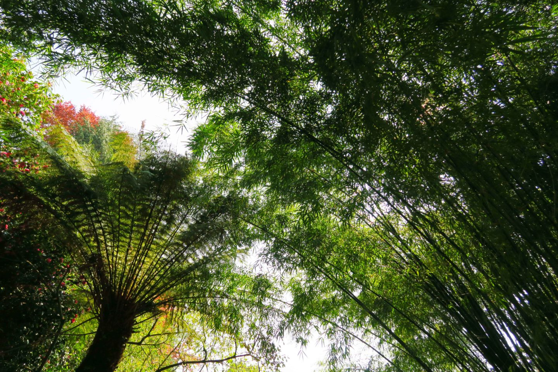 trebah gardens trees canopy in cornwall