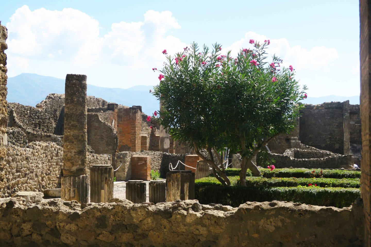 pompeii ruins with plant