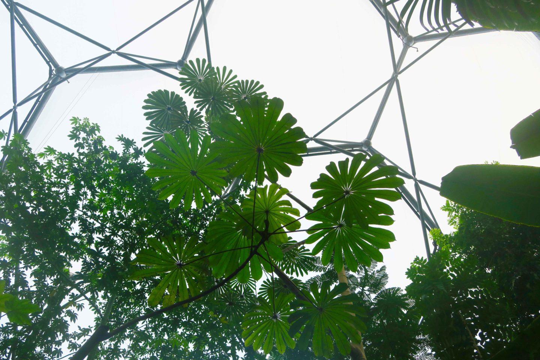 eden project rainforest biome plants