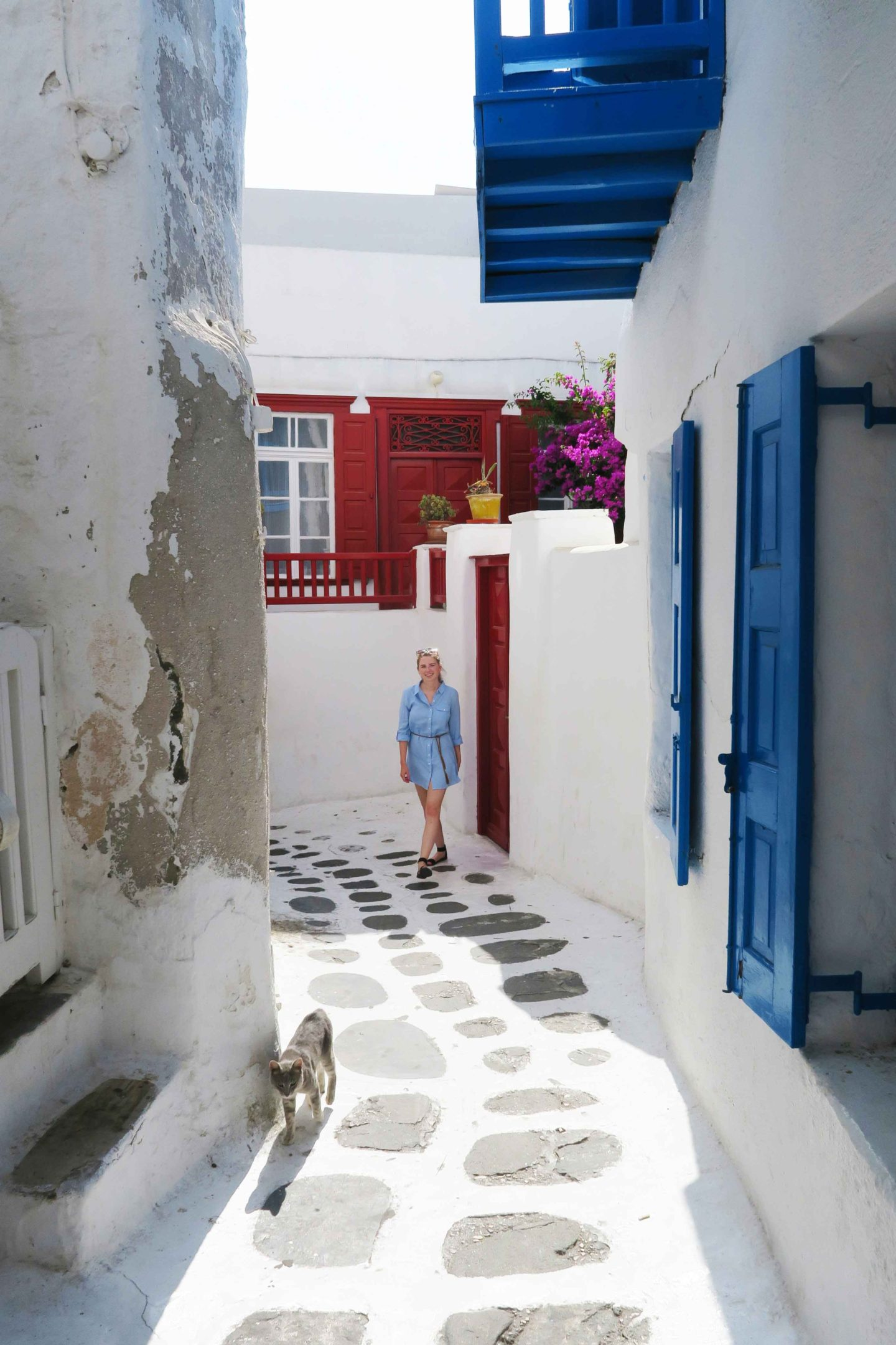 melissa carne walking on the white streets of mykonos town next to grey greek cat