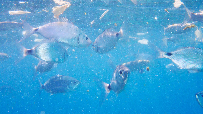 fish-eating-bread-mykonos-greece