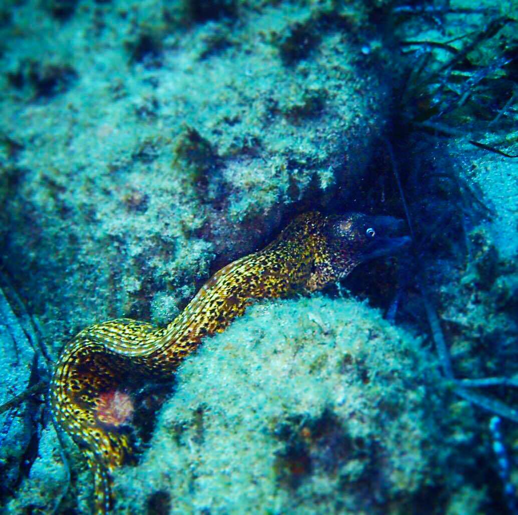 sea-snake-mykonos-greece