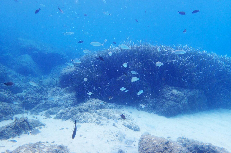 fish-underwater-mykonos-greece