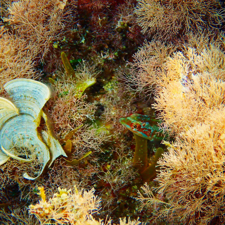 underwater-photography-mykonos-fish