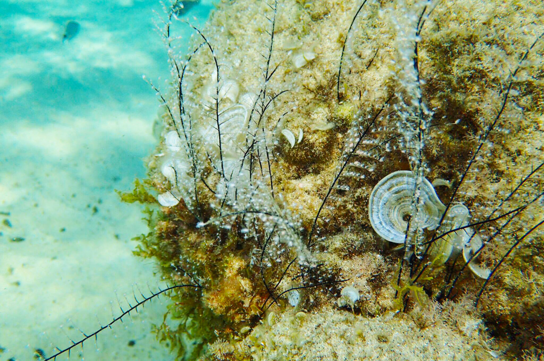 underwater-seaweed-mykonos-greece