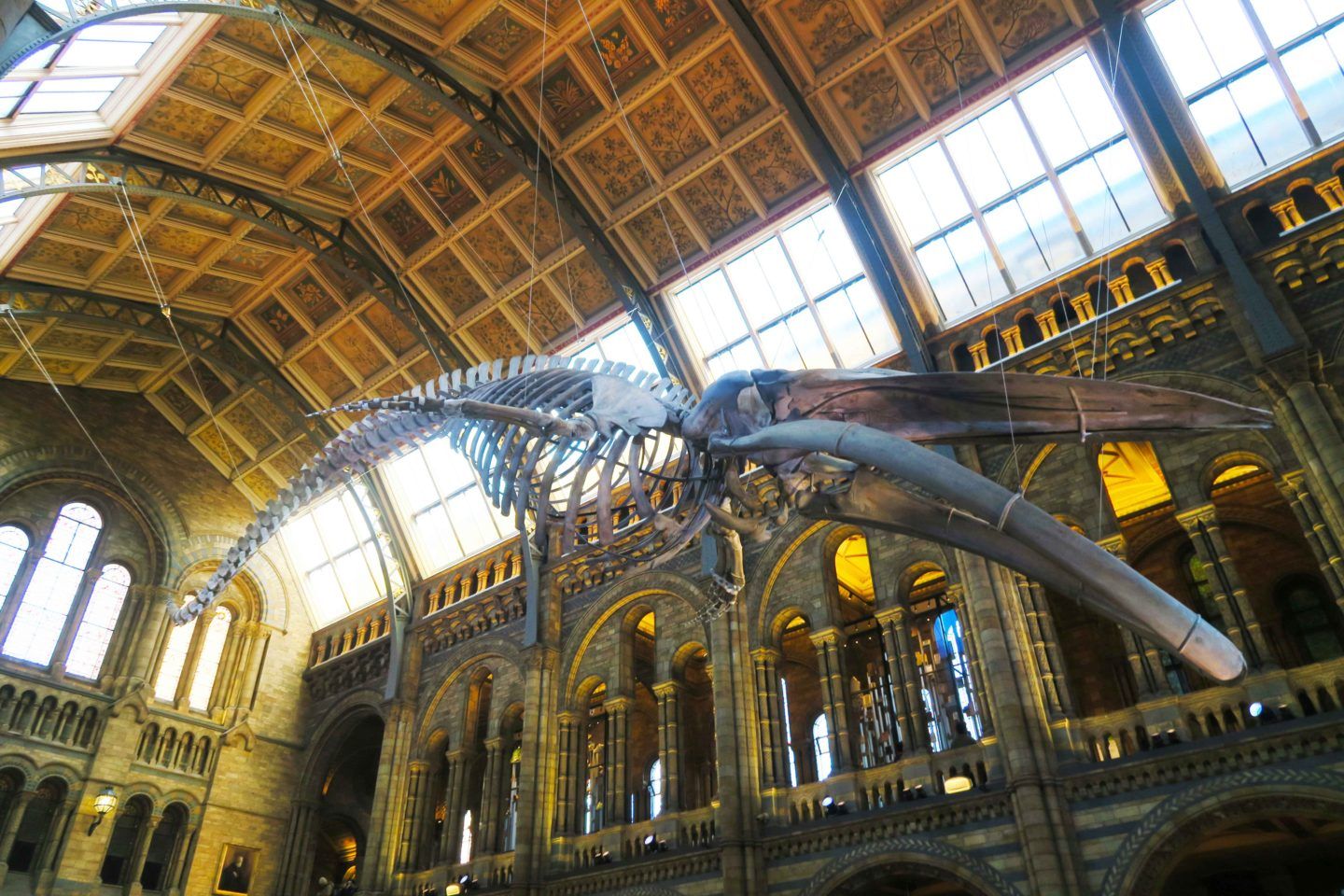 natural history museum whale skeleton