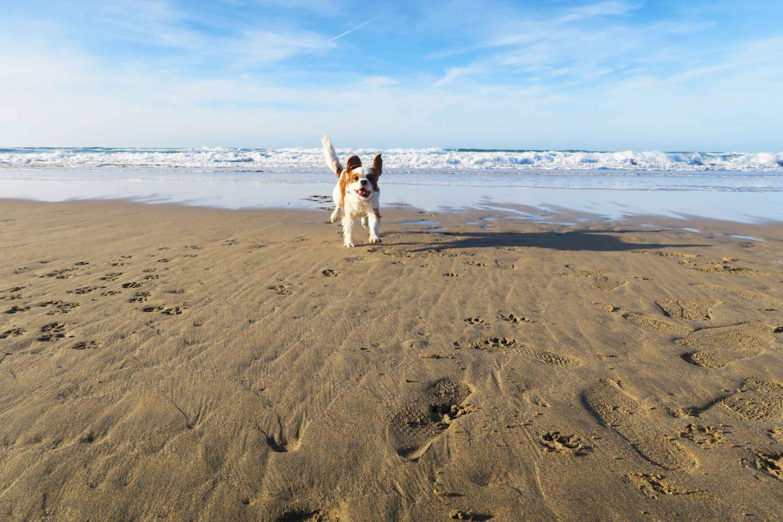 perranporth beach cornwall dog running