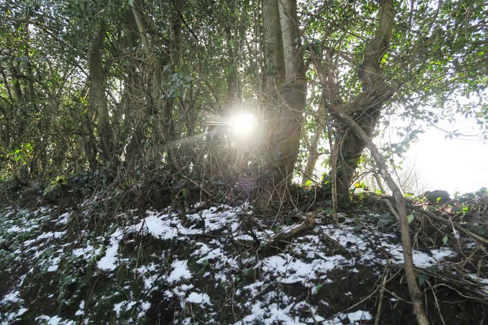 beast from the east sun through tree