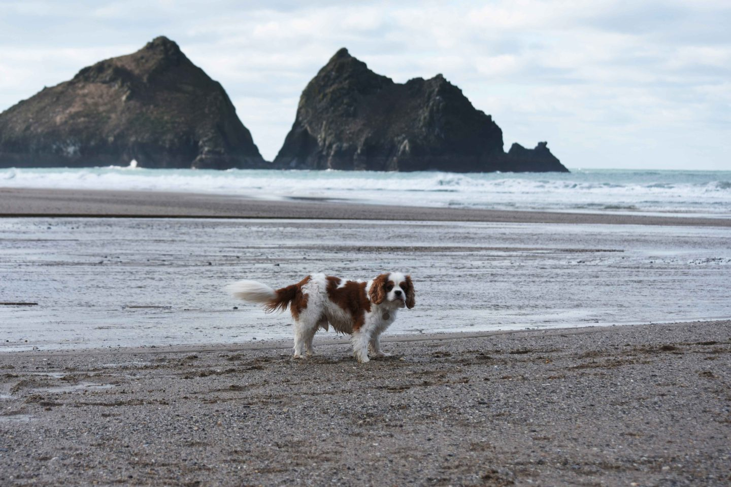 holywell bay dog in river