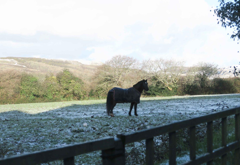 horse in snowy field in cornwall