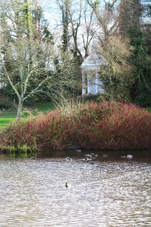 mount edgcumbe garden