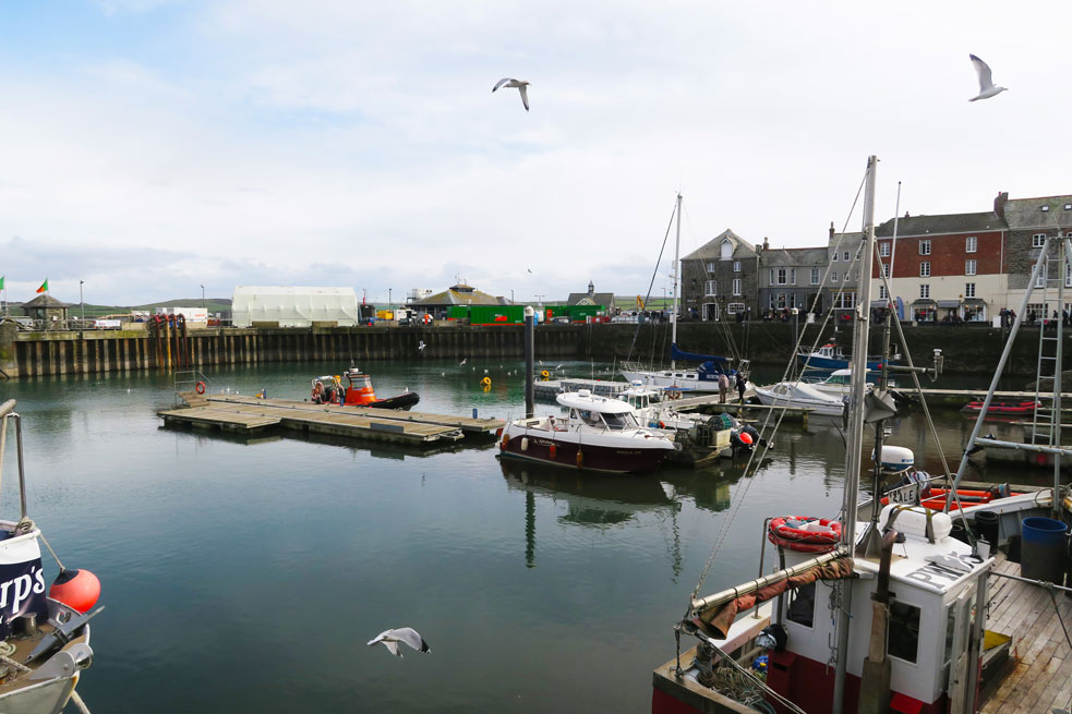 padstow harbour seagulls flying