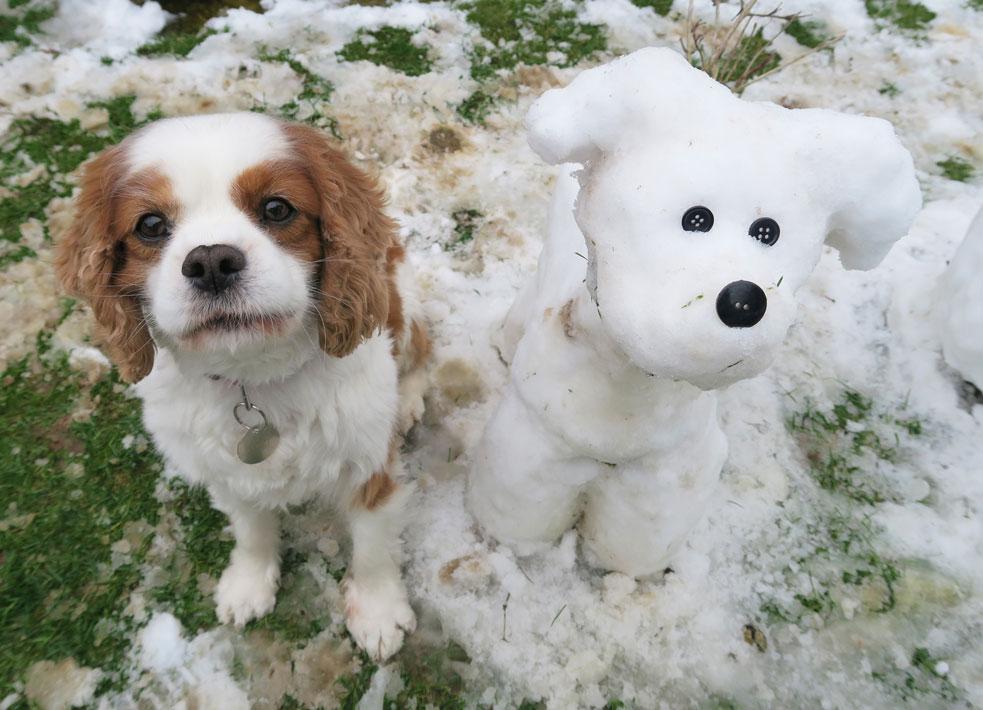 snow dog and real dog