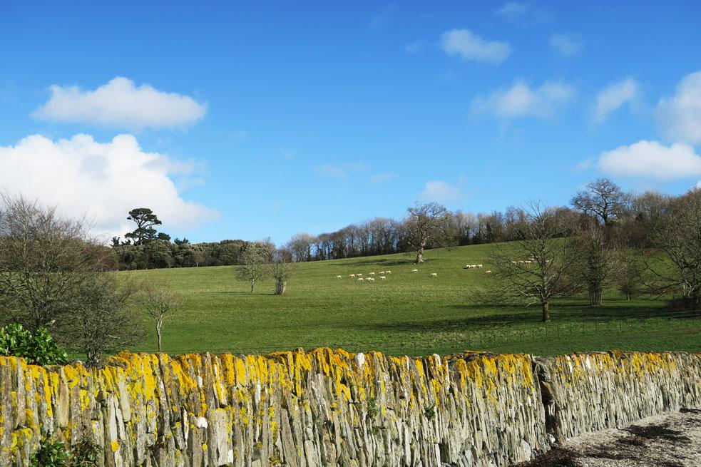 trelissick gardens wall sheep