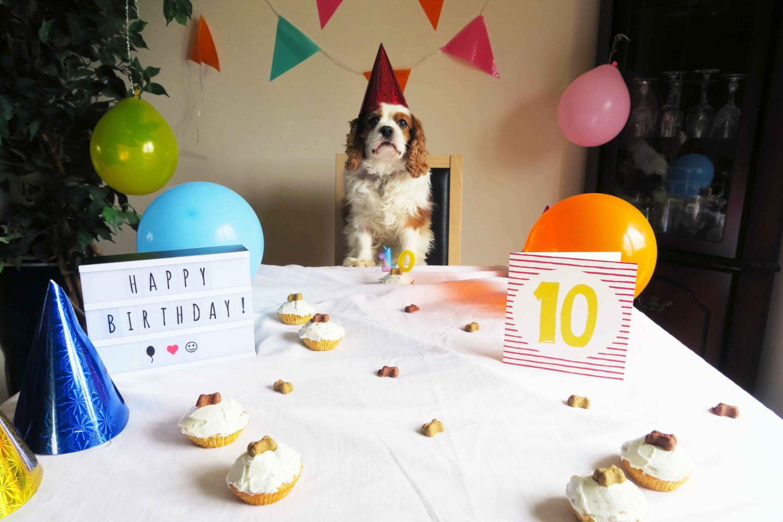 dog celebrating tenth birthday with pupcakes