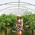 strawberry picking trevaskis farm