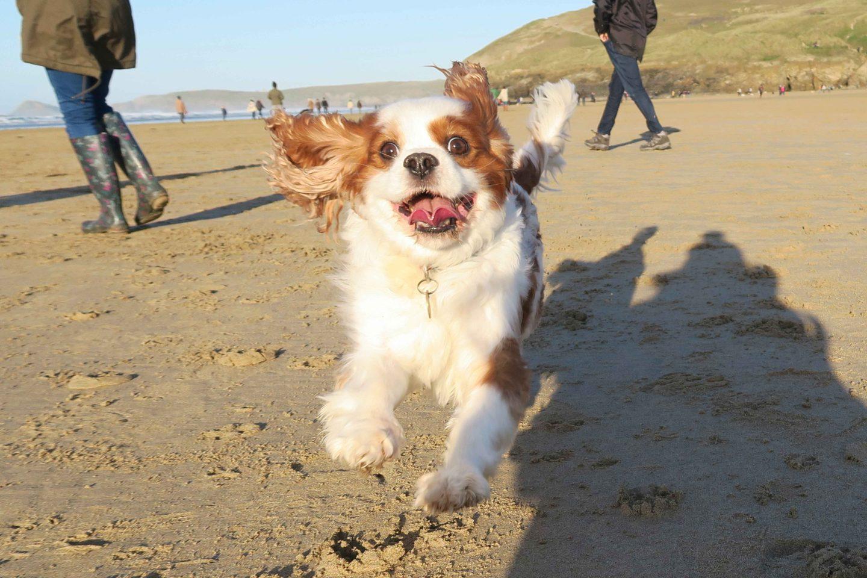 cavalier-running-on-beach