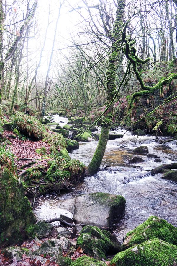 golitha falls river in cornwall