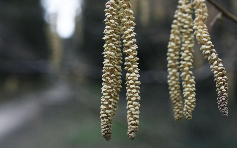 macro shot of plant at cardinham woods in cornwall