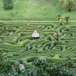 glendurgan garden maze in cornwall