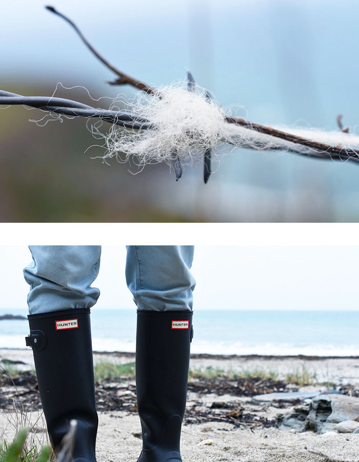 sheep wool on barbed wire, hunter wellies on beach