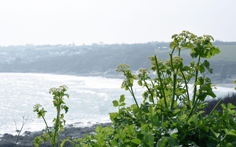 rosevine coastline in cornwall