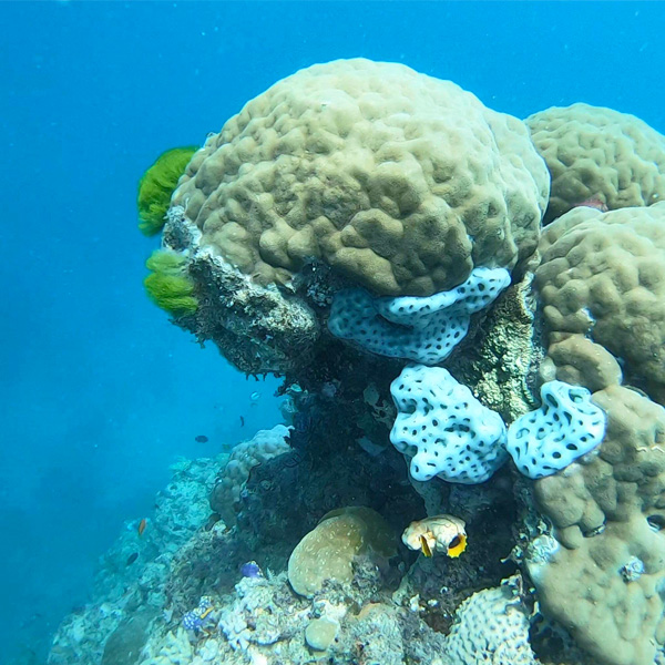 coral at the great barrier reef in australia