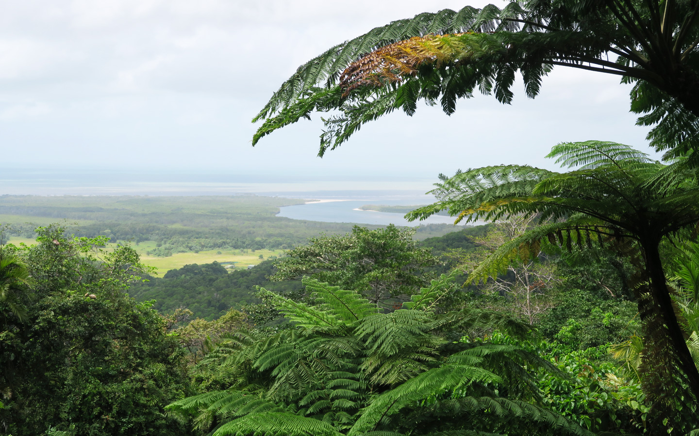 view of daintree rainforest in cape tribulation in australia