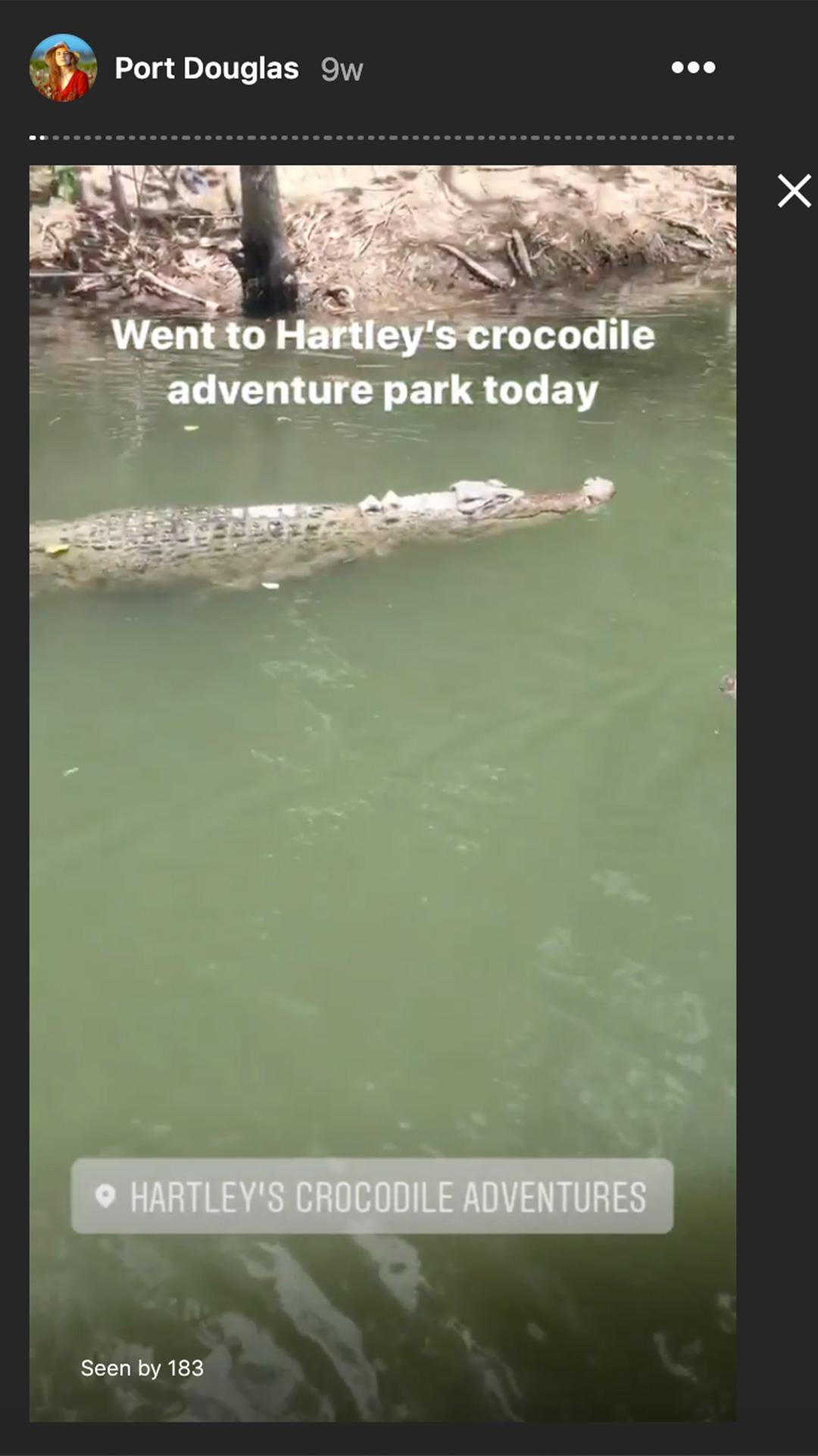 salt water crocodile at hartley's adventure park in port douglas in australia