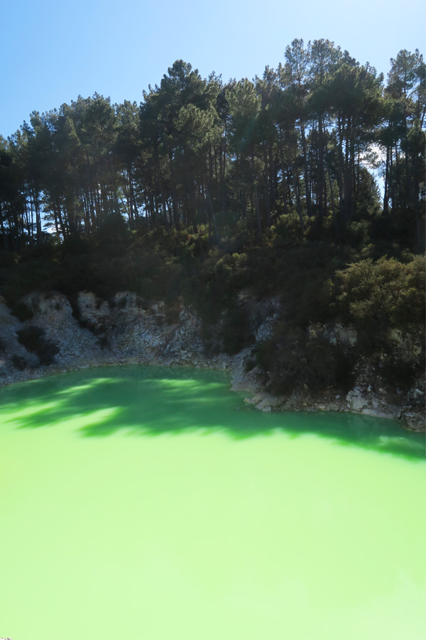 green lake with trees around in waiotapu in new zealand