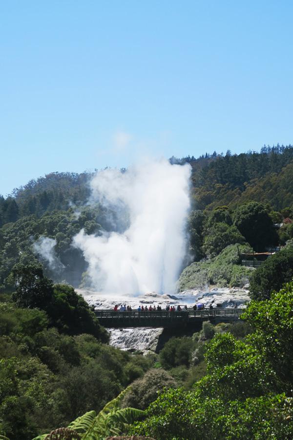 geyser exploding at tepuia in rotorua in new zealand