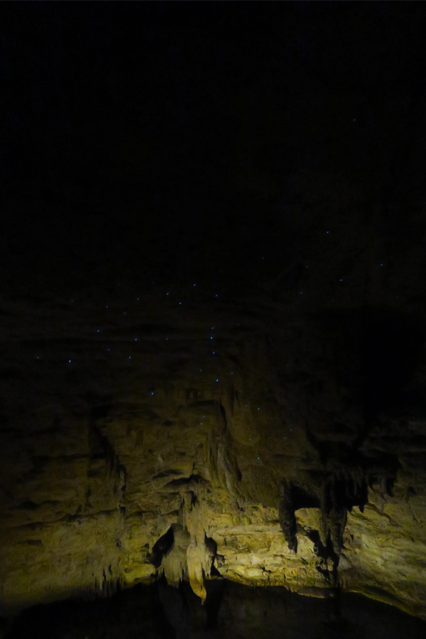 glow worms in waitomo caves in new zealand