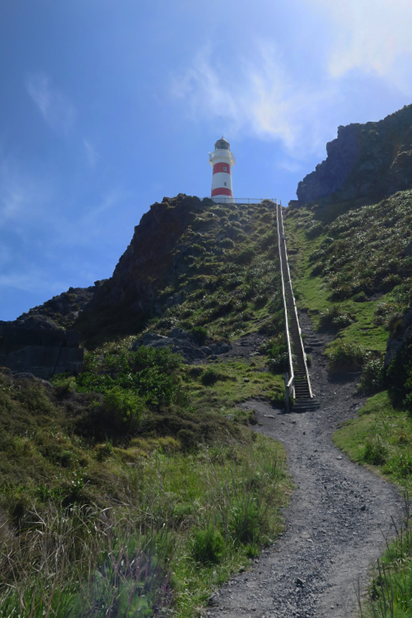 cape palliser lighthouse with 252 steps in cape palliser in new zealand