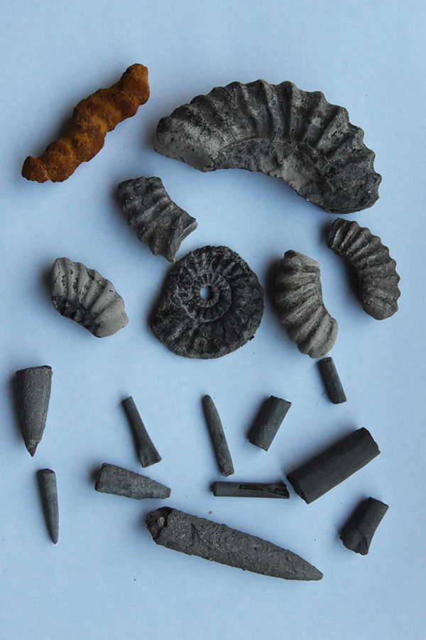 fossils found on charmouth beach in dorset, uk