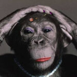 gorilla in lipstick branding analogy