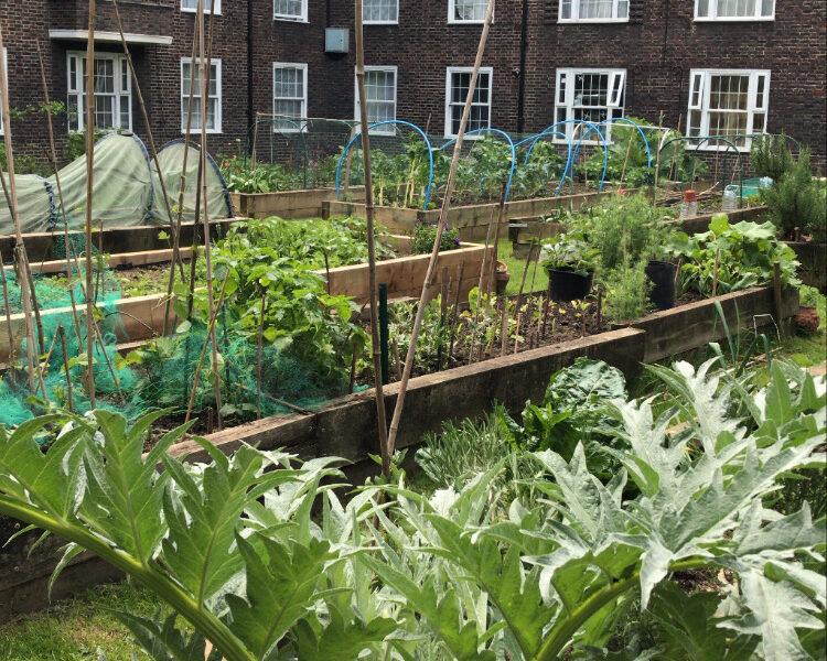 Food growing on Southwark housing estates