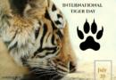 International Tiger Day 29th July 2020