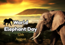 World Elephant Day 12th of August 2020