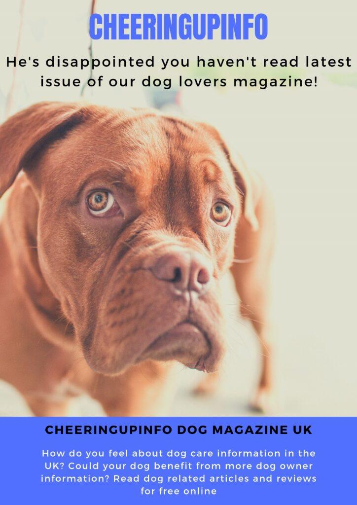 Dogs Magazines UK
