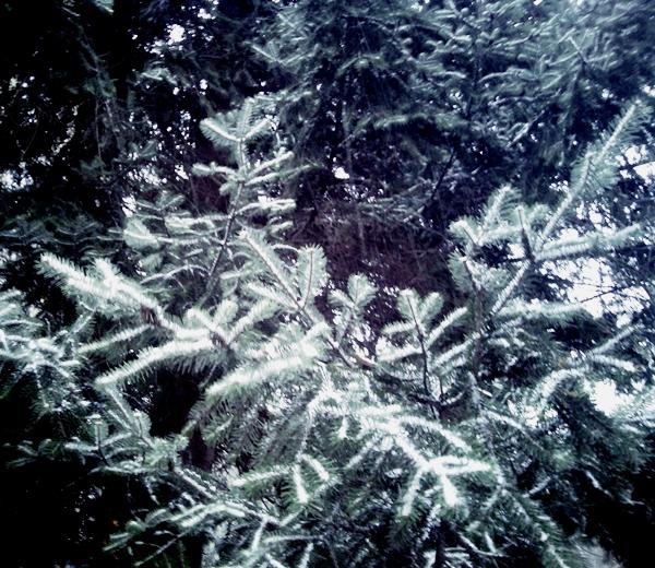 Pao prvi sneg u Srbiji