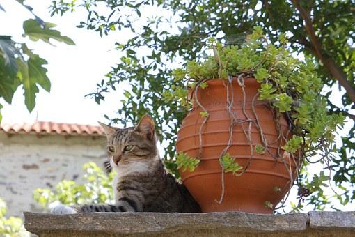 Pametne mačke lopovi ( Video)