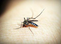 Suzbijanje odraslih formi komaraca 02.09.2020