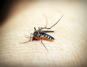 Suzbijanje odraslih formi komaraca na teritoriji grada Beograda,25.08.2018. godine