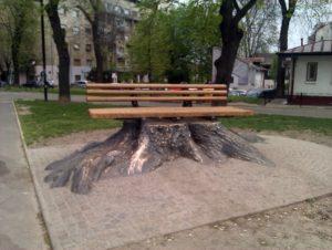 Prvi spomenik u Beogradu koji je posvećen jednoj biljci – Klupa Sofora