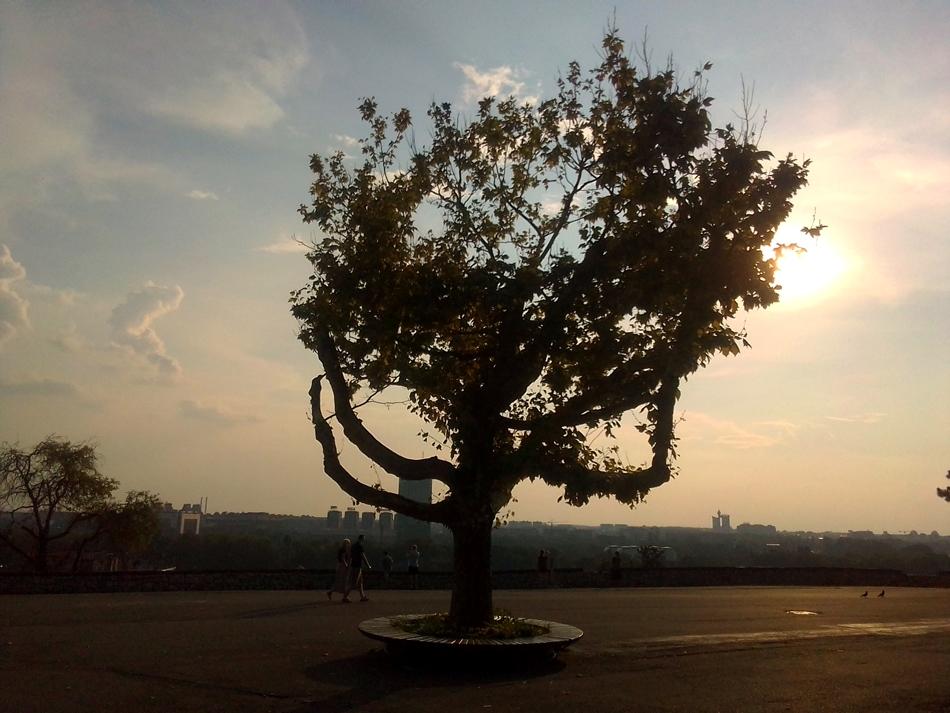 Beogradska priča: Kada se vodilo računa o sadnji stabala